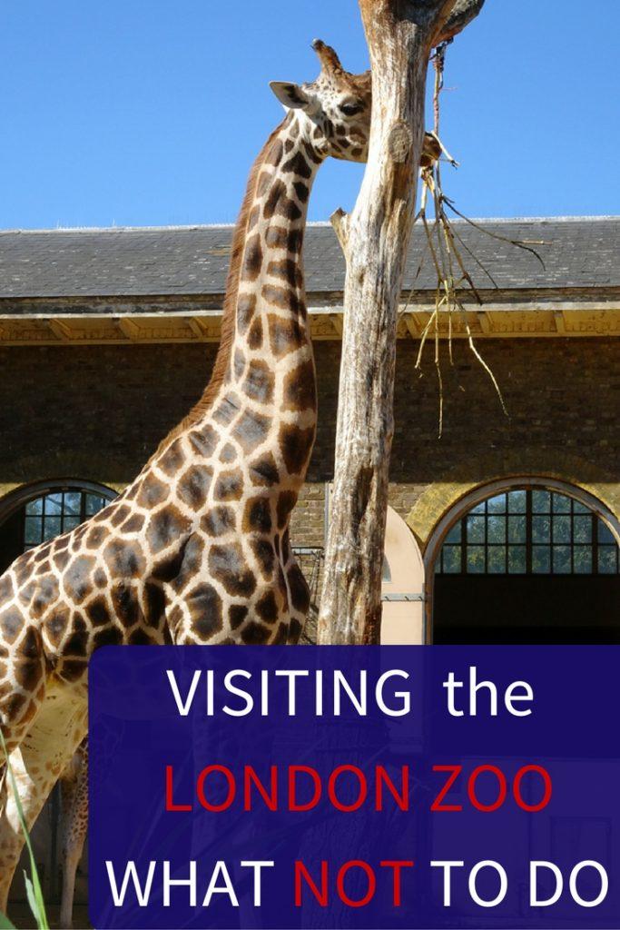 Visiting London Zoo Tips