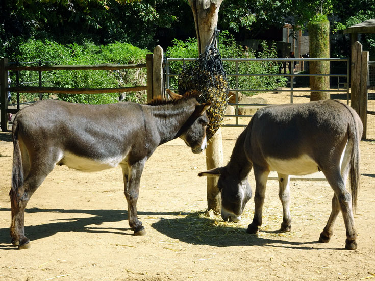 Visiting London Zoo tips- donkeys