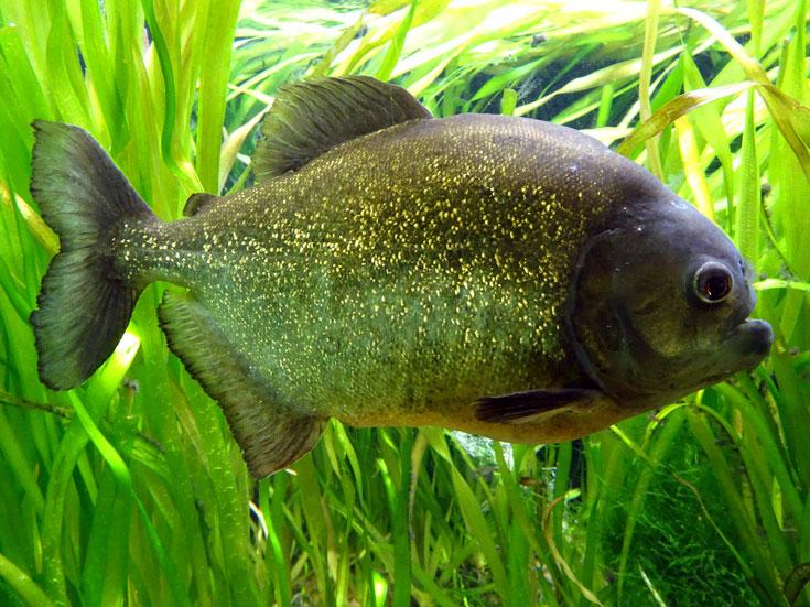 Visiting London Zoo tips- fish aquarium