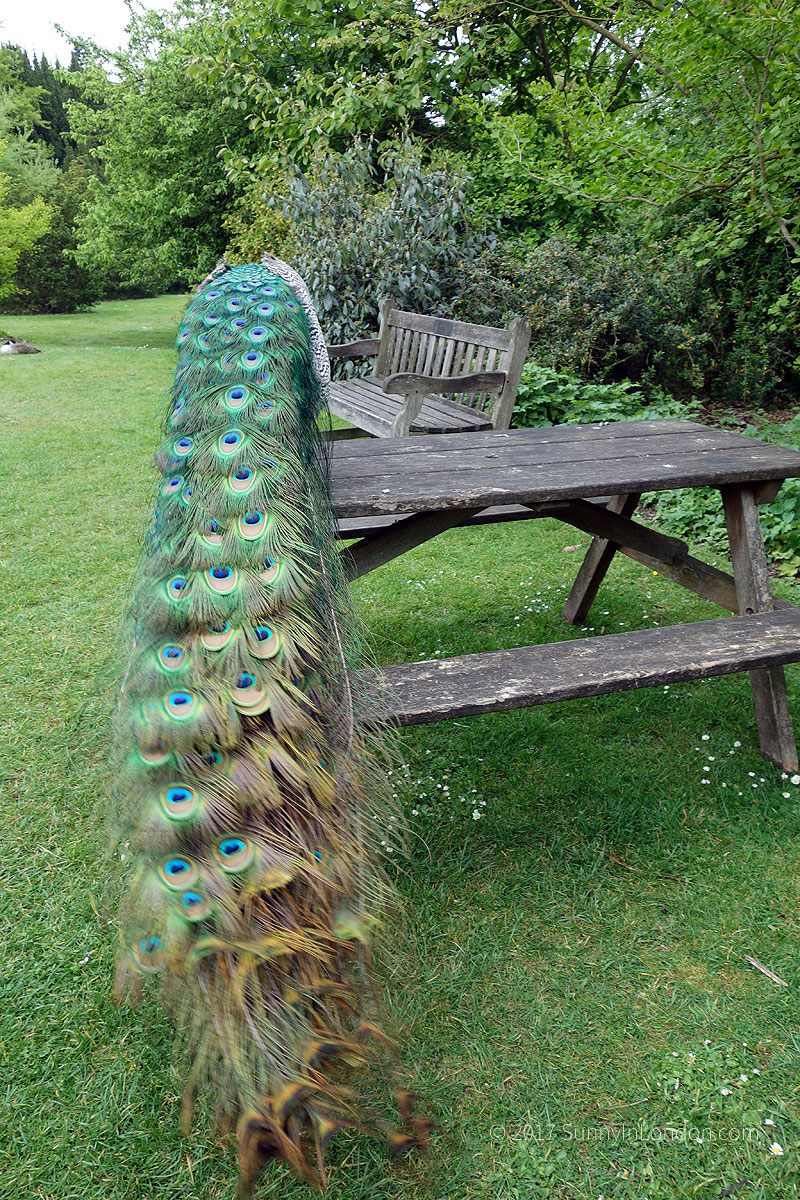 tips-visiting-kew-gardens-london